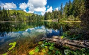 Картинка Природа, Облака, Озеро, Лес, Канада, Ель, Пейзаж, Hadikin Lake