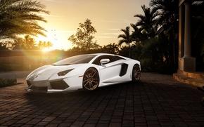 Картинка белый, солнце, пальмы, Lamborghini, перед, white, блик, особняк, ламборджини, front, LP700-4, Aventador, ламборгини, авентадор