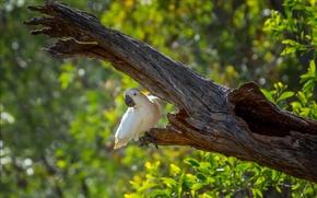 Обои зелень, дерево, птица, попугай, боке