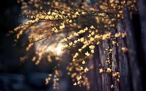 Картинка макро, цветы, фото, фон, ветви, обои, забор, растение