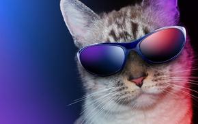 Картинка кот, крупный план, фон, юмор, очки
