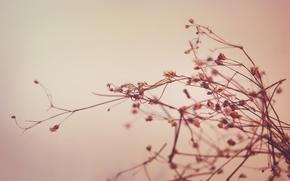 Обои макро растение, стебель, природа
