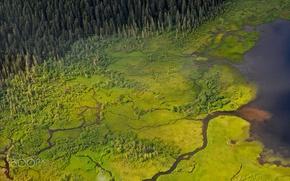 Картинка лес, природа, река, вид сверху, болота