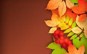 Обои листья, рябина, осень