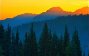 Картинка ель, Last Light, оранжевый закат, Mt Rainier, Washington State, Don Briggs, синие горы