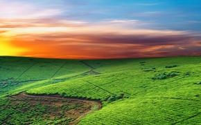 Картинка небо, линии, поля, горизонт