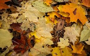 Картинка осень, капли, макро, листва