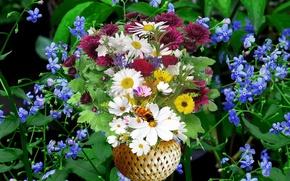 Картинка фон, ромашки, букет, полевые, луговые цветы, Васильки