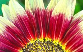 Картинка цветок, краски, лепестки