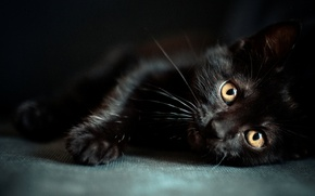 Обои wallpapers, мордочка, глазки, котенок, черный