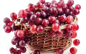 Картинка красный, ягоды, корзина, berry, виноград, гроздь, red, basket, Grapes, raceme