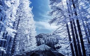 Обои nature, деревья, железная дорога, природа