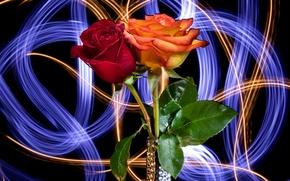Картинка фон, роза, лепестки, бутон