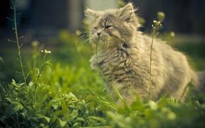 Обои лето, кошка, трава, виста, безмятежность