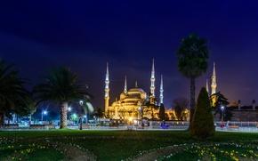 Обои пальмы, мечеть, город, храм, Istanbul, собор, монастырь, ночь, Турция, фото, газон