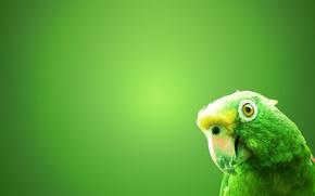 Картинка зеленый, фон, птица, попугай