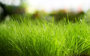 Картинка природа, зеленый, Трава
