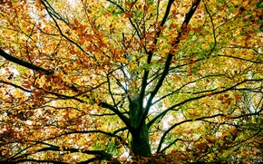 Картинка осень, ветки, дерево, листва