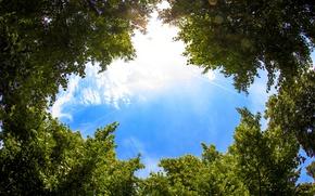 Обои небо, листья, облака, деревья, sky, trees, clouds, leaves