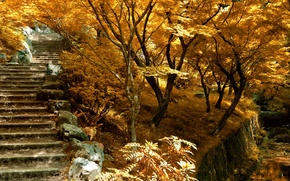 Картинка осень, деревья, природа, лестница, Nature, trees, autumn, ступенки, fall