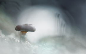 Картинка холод, иней, снег, белое, гриб