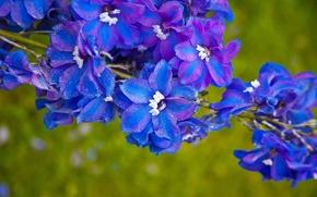 Картинка природа, ветка, лепестки, соцветие