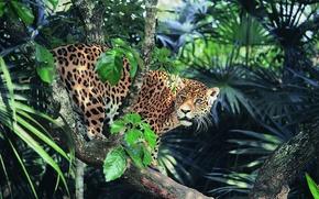 Картинка взгляд, джунгли, Ягуар, солнечный свет