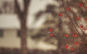 Картинка зима, макро, снег, снежинки, ветки, ягоды, дерево, размытость, красные, Рябина