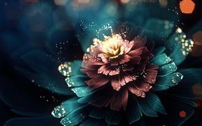 Обои свет, цветок, лепестки, абстракция