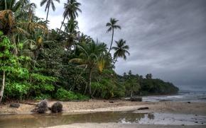 Картинка пляж, деревья, тучи, пальмы