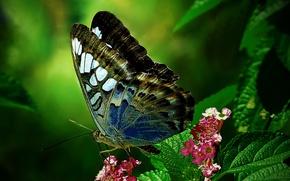 Картинка цветок, лист, бабочка, мотылек