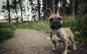 Картинка собака, взгляд, лето, друг