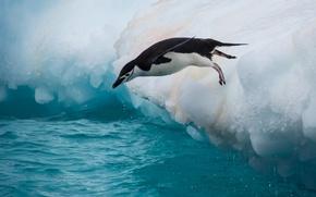 Обои вода, прыжок, птица, пингвин, льдина, Антарктический пингвин