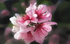 Картинка макро, линии, цветы, весна, сад, штрих
