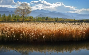 Картинка лето, горы, озеро, река, камышь