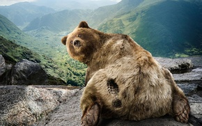Обои природа, юмор, медведь