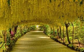 Картинка деревья, цветы, аллея