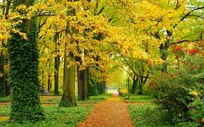 Обои осень, парк, деревья, листья, желтые