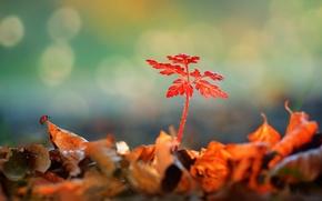 Картинка листья, блики, растение, божья коровка, опавшие