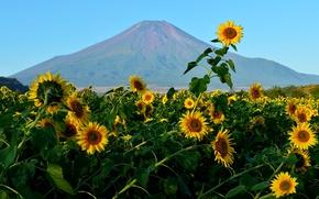 Картинка поле, небо, цветы, гора, подсолнух, Япония, Фудзияма