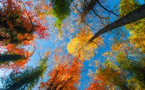 Картинка осень, небо, листья, деревья, природа, голубое, время года