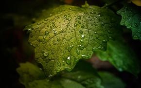 Картинка капли, лист, зелёный