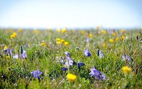 Картинка поле, трава, цветы, роса, луг, альпийские