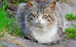 Картинка кошка, лето, спит, сидит