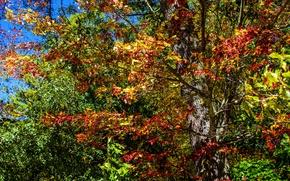 Картинка листья, деревья, Осень, colorful, trees, autumn, leaves
