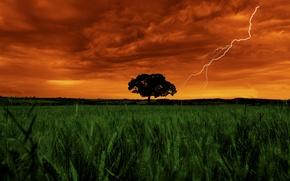 Картинка Vegetation, Color, Garden, Landscape, Lightning, Clouds, Sky, Field, Grass