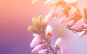 Картинка цветы, макро, flowers, краски, свет, petals, macro, природа, colors, лепестки, light, nature, 2560x1600
