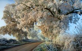 Обои иней, дорога, деревья, осень