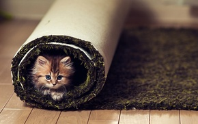 Обои взгляд, котенок, пол, ковер