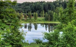 Картинка деревья, пейзаж, озеро, Estonia